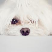 Puppy [LG Home+]