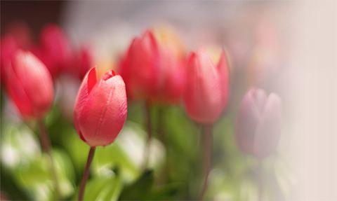 A doce e fantástica fragrância das flores