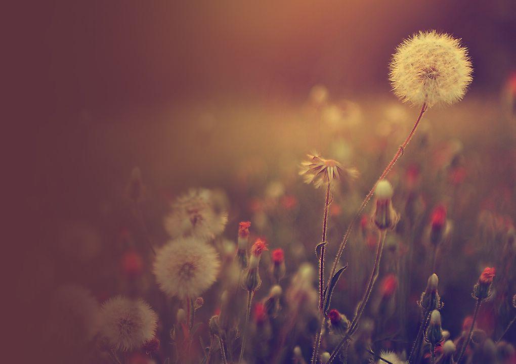 [las cosas pequeñas de tu vida te hacen sentir feliz y la música Hi-Fi conmueve a su corazón suavemente con una melodía dulce piano]