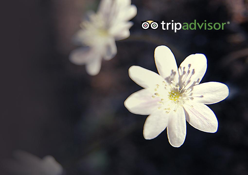 [TripAdvisor 2 - Melhor coleção da primavera pelo mundo]